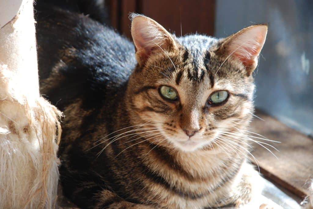 Make sure your timid cat's forever home is safe and that their adopter knows what to expect