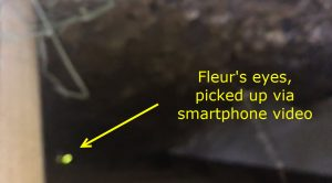 Film with a smart phone in dark places to identify eyeshine of a lost cat. se a mobile phone