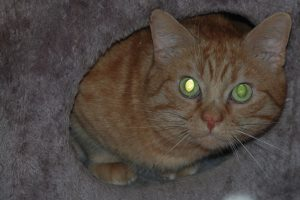 A photo taken with a flash may turn your cat's eyes green