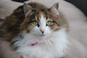 Sheridan was lost for eight months. Her microchip saved her.