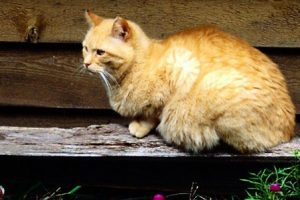 Becoming a working cat or barn cat is an option for cats who don't socialise