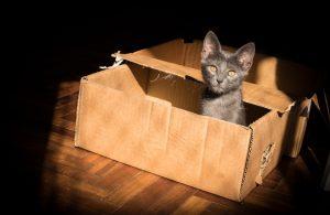 Grey cat sitting in cardboard box